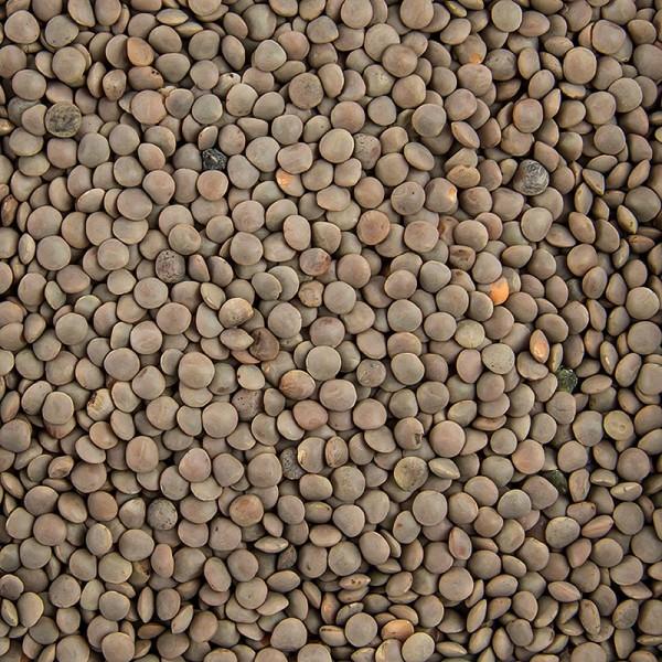 Sabarot - Kleine braune Linsen (wie aus der Champagne)