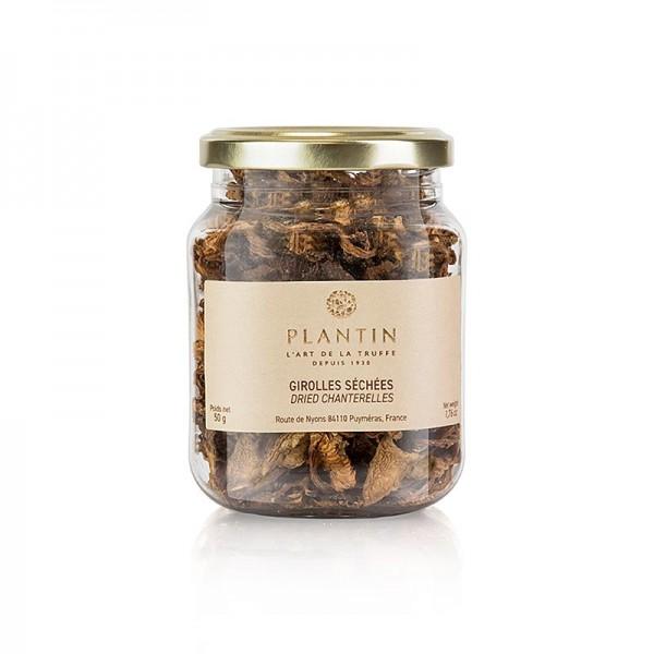 Plantin - Goldstiel-Pfifferlinge - Girolles Plantin